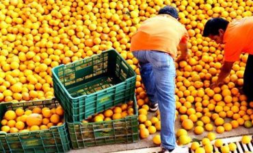 Egypt may become biggest orange exporter
