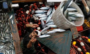 Morocco's Fish and Seafood Landings Fall 7% in January 2018