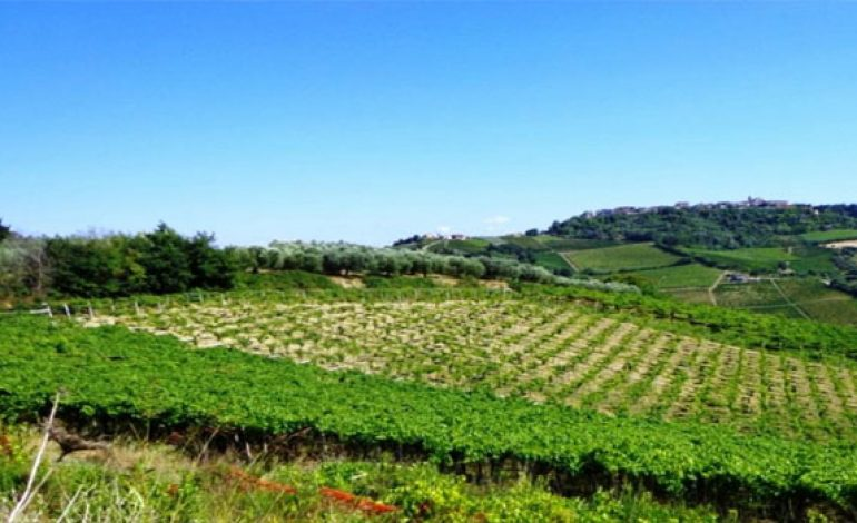 Algeria cancels plan to let foreigners into farmland concessions