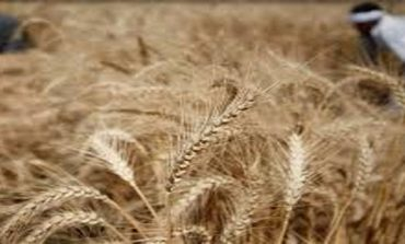 Egypt removes ban on importing Russian wheat