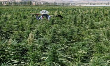 Lebanese cannabis farmers hope legalisation may bring amnesty
