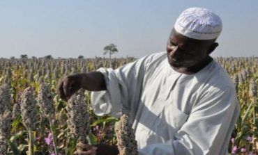 U.S. company to grow peanuts in South Darfur: minister