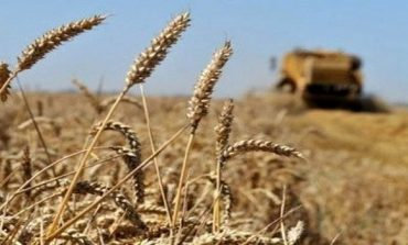 Cereals: production value reaches DZD220 billion in 2018